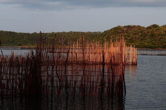 trappola per pesci Kosi Bay