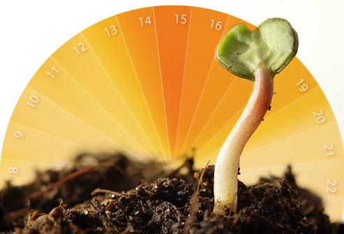 cálculo do período fértil jardim