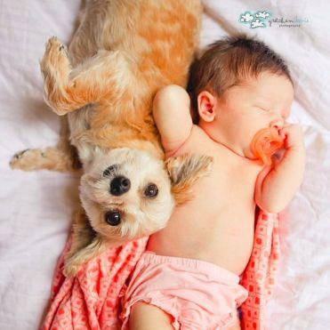 recém-nascido com cachorro