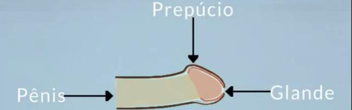 Imagem: Porta da Urologia