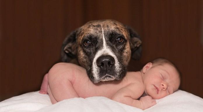 como acostumar o cachorro com o seu bebê