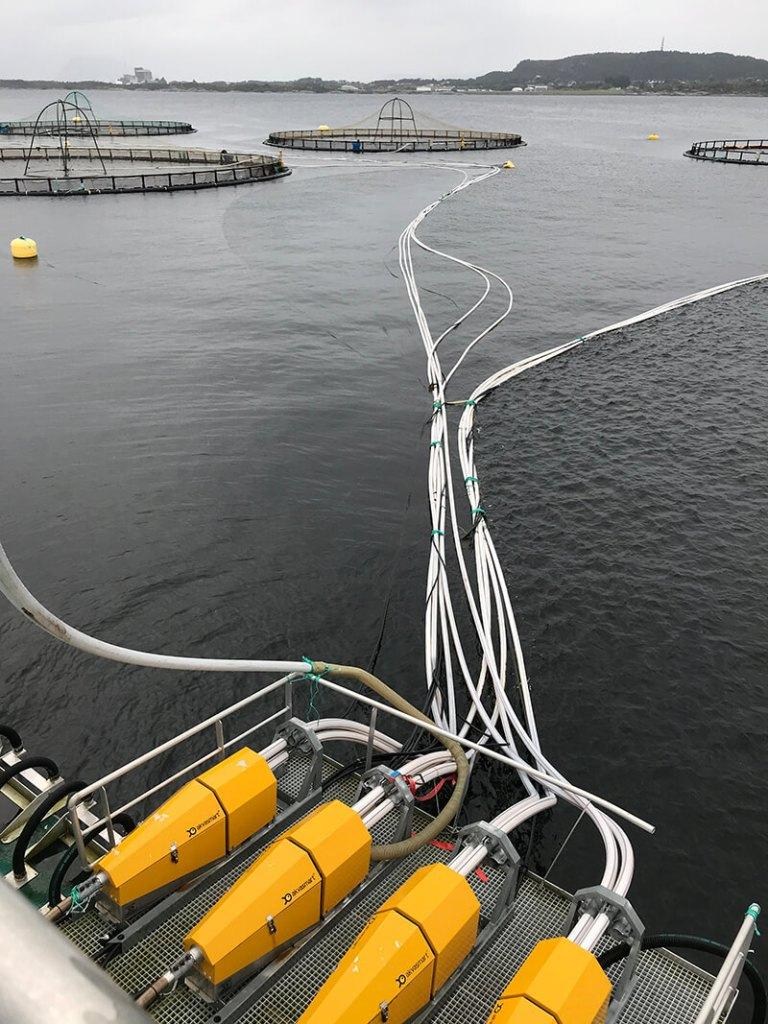 Feed distribution to salmon pens