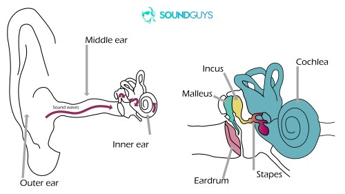 small resolution of bone conduction headphones noise induced hearing loss two diagrams the one on