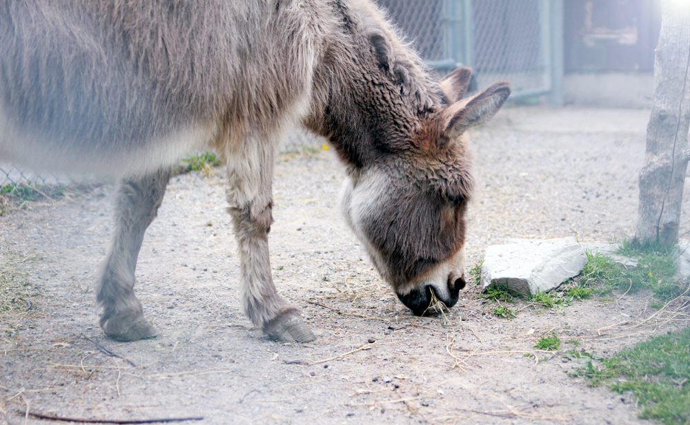 donkey in peterborough zoo