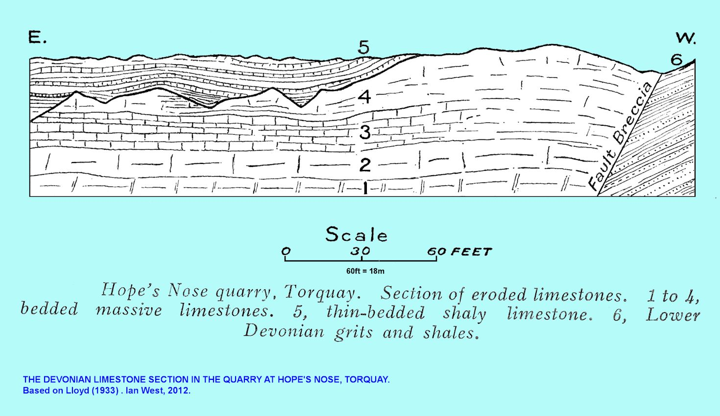 hight resolution of a diagram of the devonian limestone cliff in hope s nose quarry torquay devon