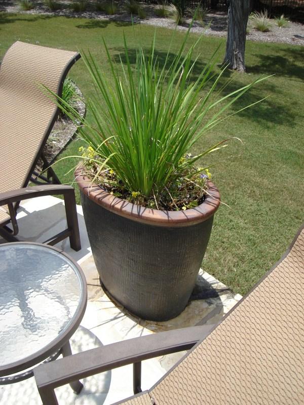 5 drought-tolerant texas plants
