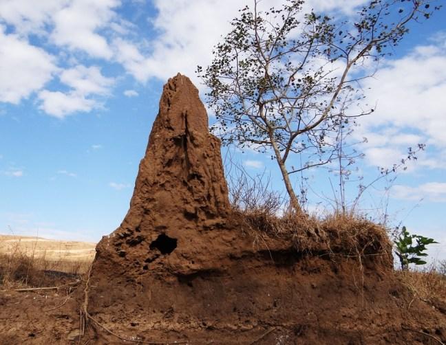 Termites place