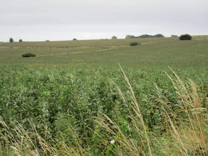 Fields of them
