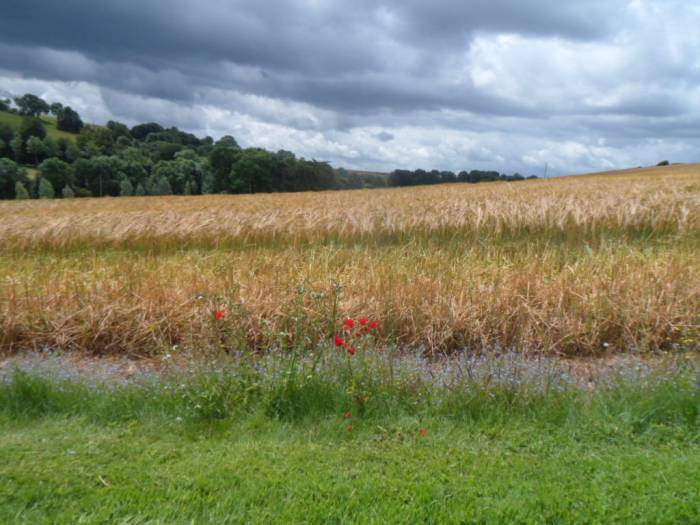 This field is framed with a border of poppies and forget-me-nots