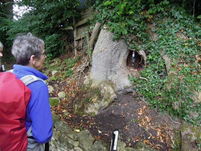 Heather notices a hollow tree trunk