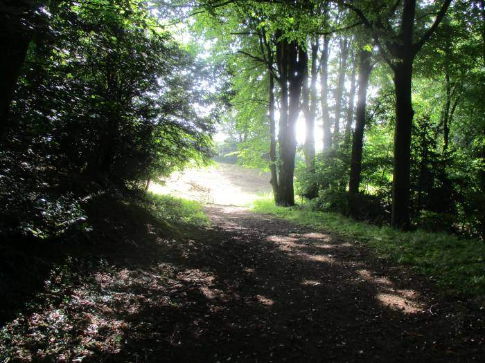The sun shining at the end of the wood