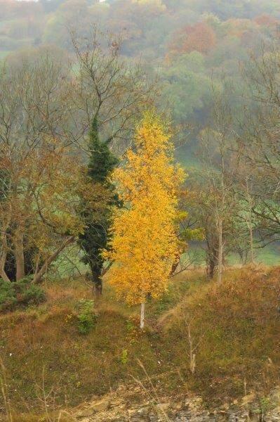 Reaching Leckhampton Hill