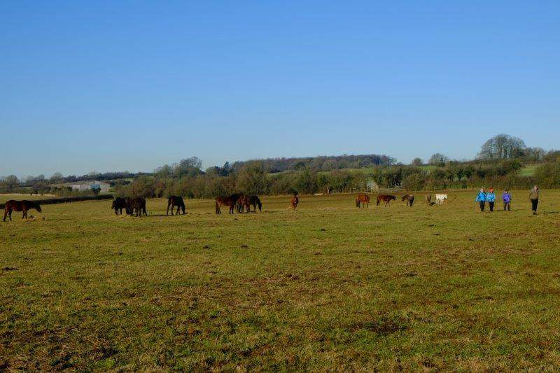 Our path takes us through a herd of polo ponies