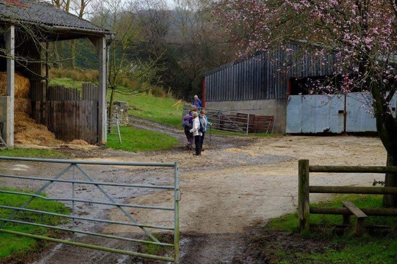 Into a farmyard
