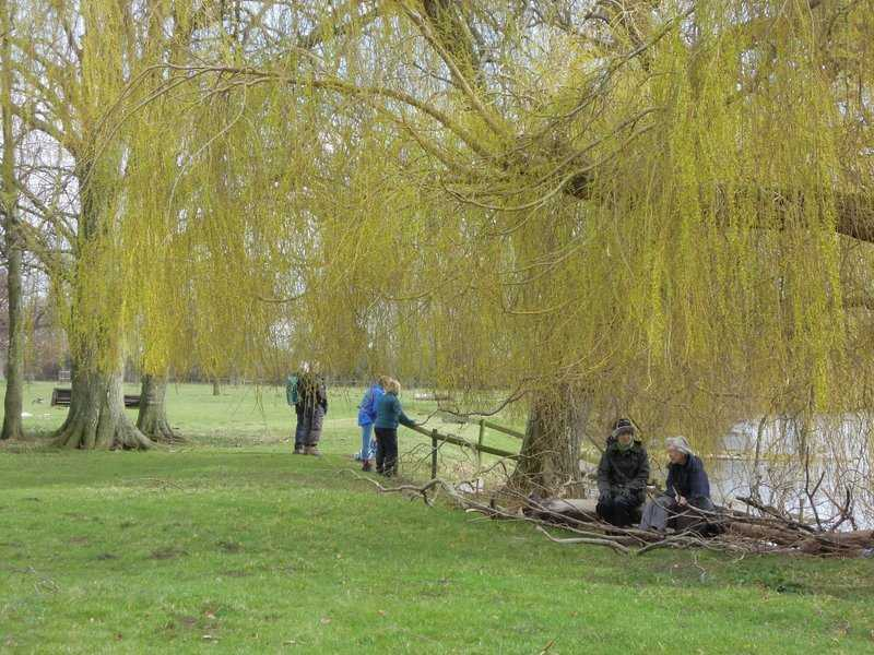 Lovely willows