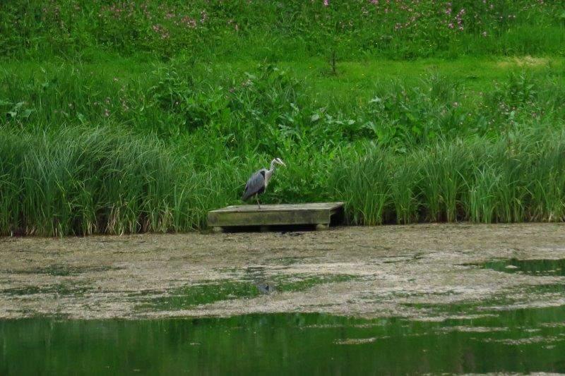 A keen fisherman