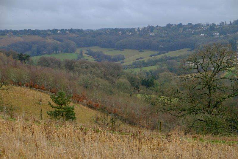 Looking over to Manor Woods