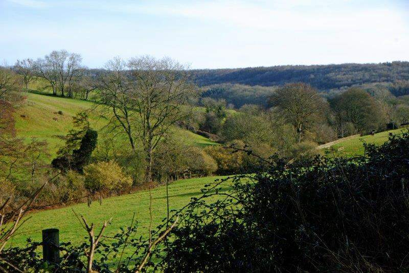 Looking back up to Standish Woods