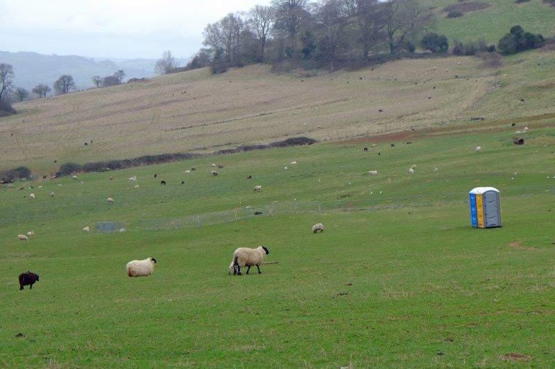 Where the sheep have their own portaloo