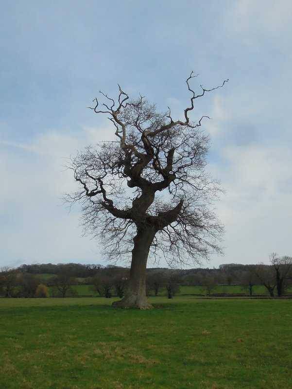 A striking winter tree