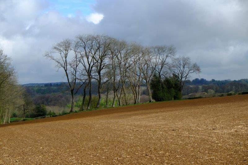 A pleasant rural scene