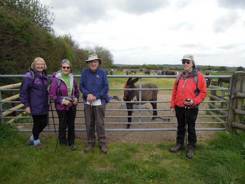 After a stop for food we find donkeys across the fields