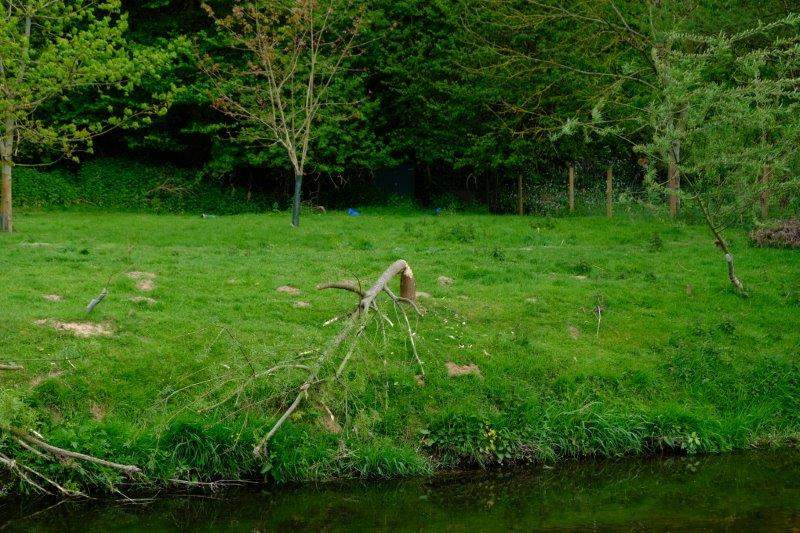 A beaver has had a go at this tree