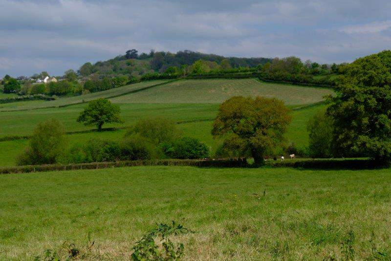 Looking across the fields to Wotton Hill