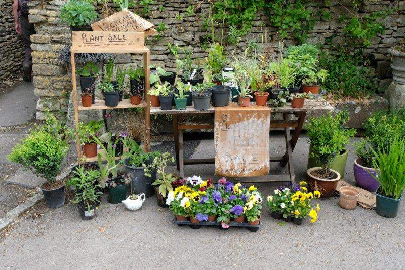 Now entering Sopworth - plants for sale
