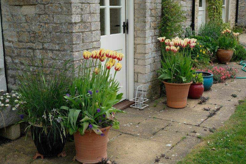 Into Sherston - pretty tulips