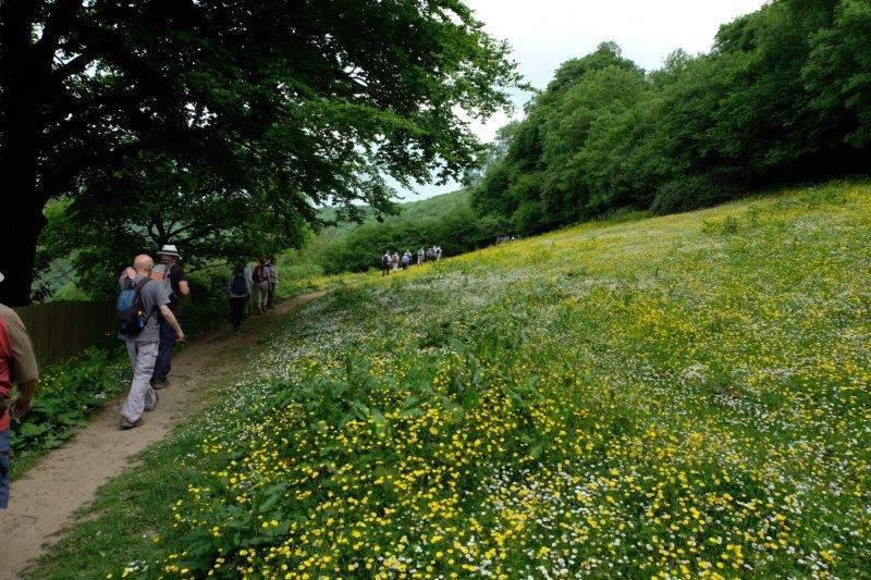 Then a field of buttercups