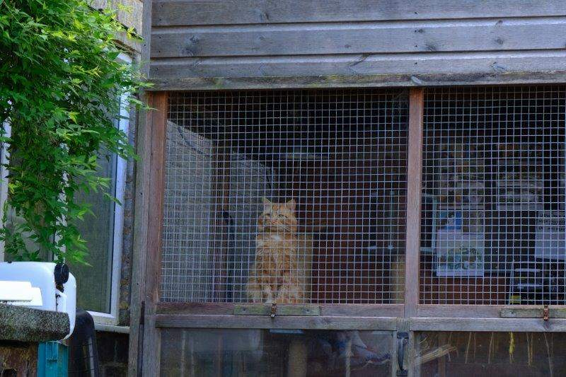 Where cats should be - in a cage