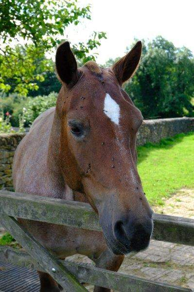 As we are watched by a friendly horse with flies and a diamond blaze