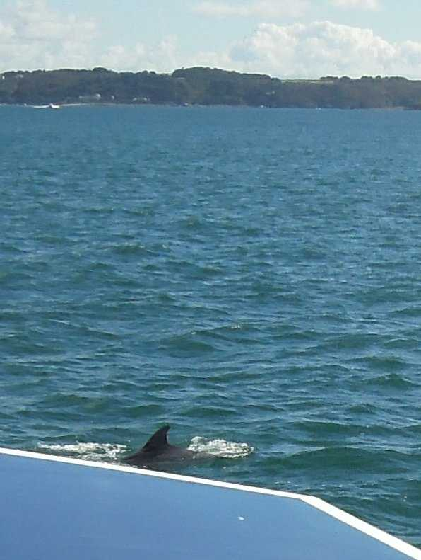 And I manage to snap the fin of one of them