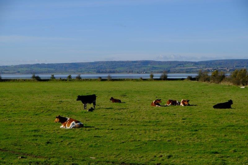 Views across the River Severn