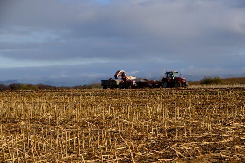 Farmers busy in the fields