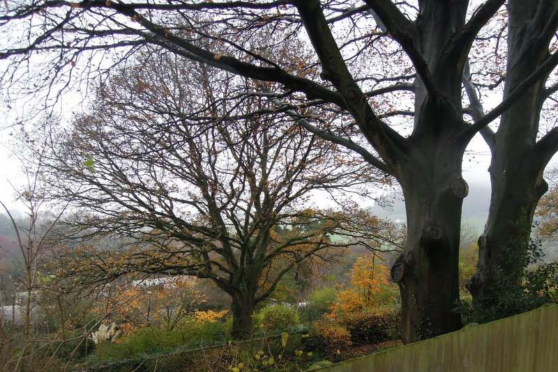 Autumn leaves still colourful