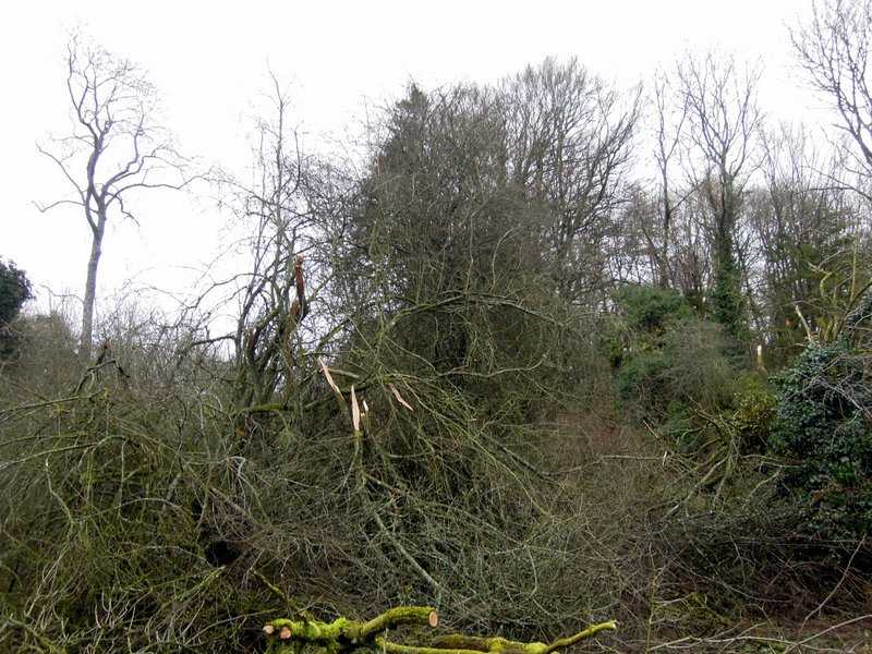 Some recent gales have pruned branches