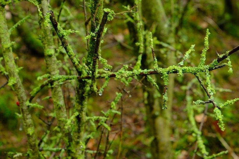 Today's lichens