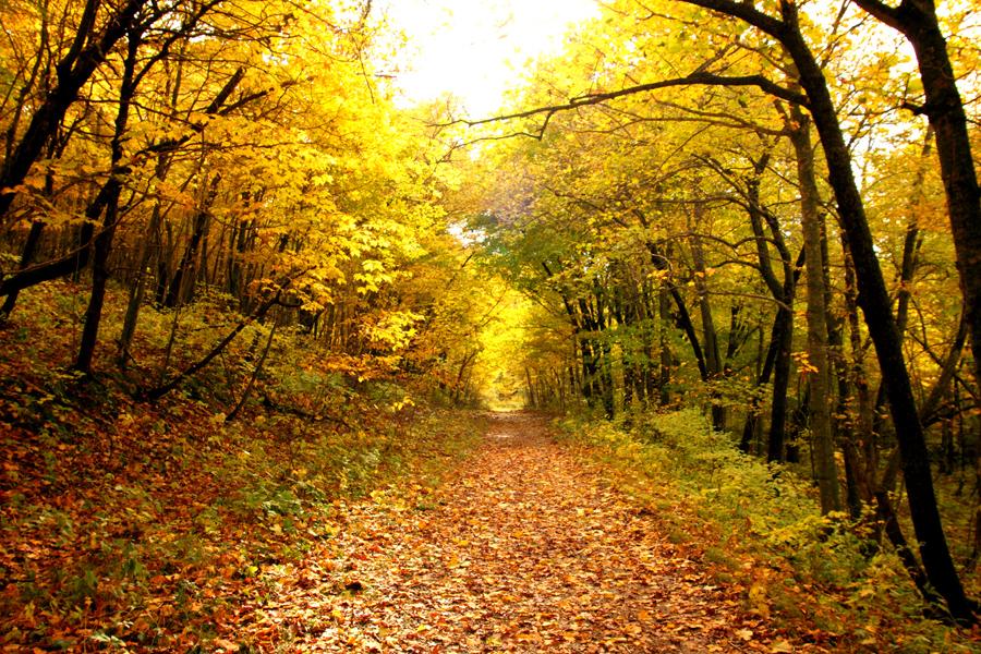 Desktop Wallpaper Fall Foliage Chasing Fall Color