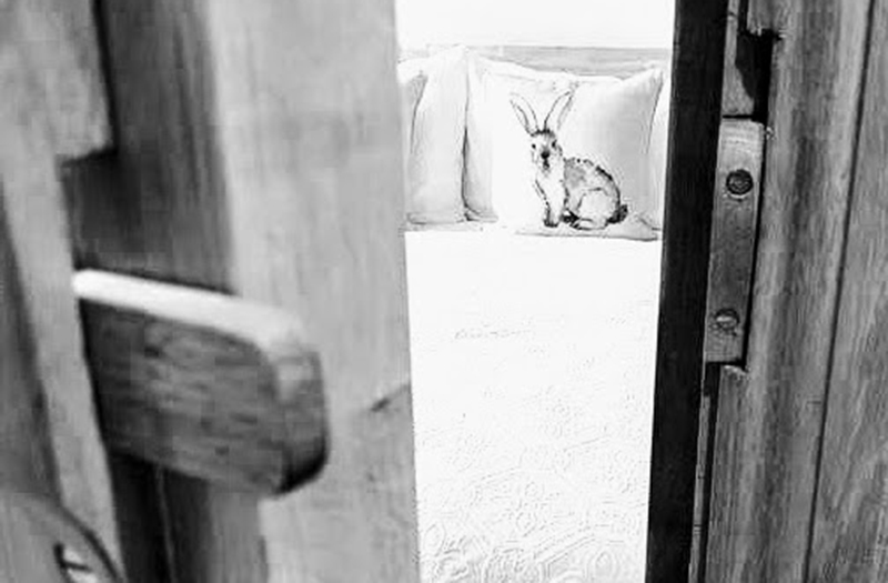 hare-rabbit-south-downs-stay