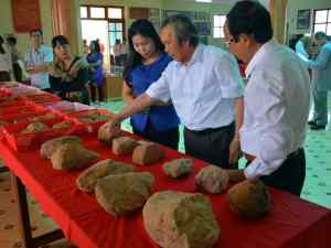 Stone tools from Vietnam. Source: Thanh Nien News 20160405