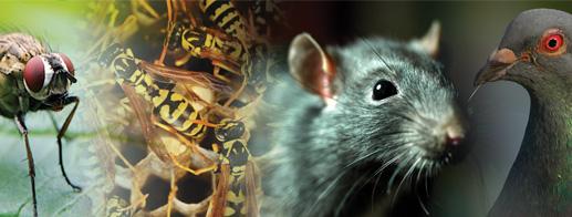 Pest Control Beaumont area - industrial pest control SETX