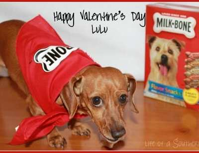 Valentine's Day for Dogs – Say I LOVE YOU with treats!