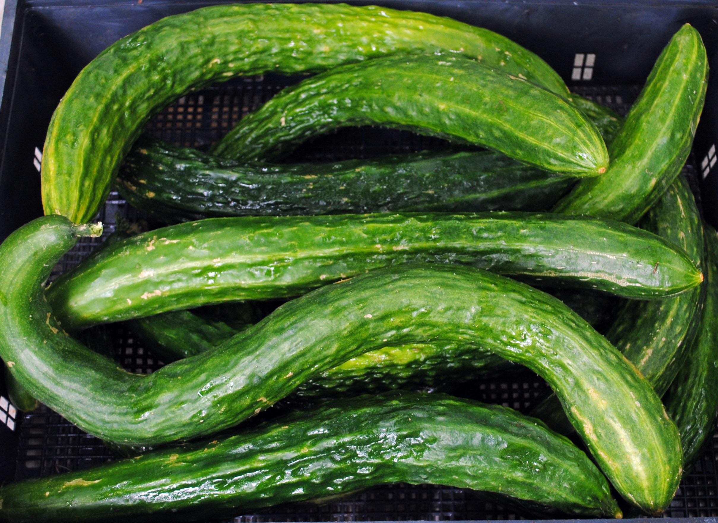 Suyo Long Asian Cucumber 2 G Southern Exposure Seed