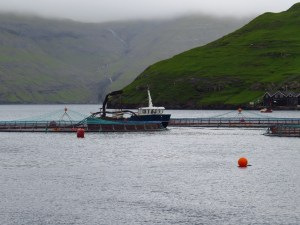 A few of the net pens and tender ship, with a few of the mountains nearby. Production in this fjord will go fallow far a few years after this harvest to protect from disease and move to the next fjord carved from the mountainside. Credit: Andrew Thaler