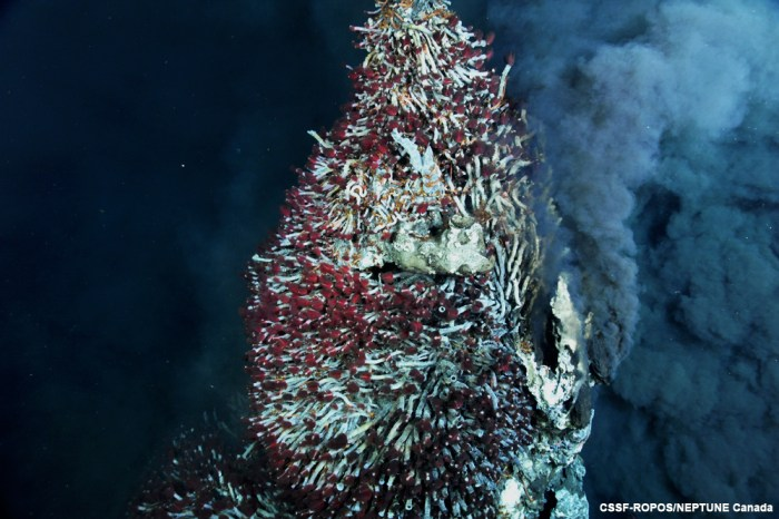 Black smoker with tubeworms. Juan de Fuca Ridge. NEPTUNE Canada.