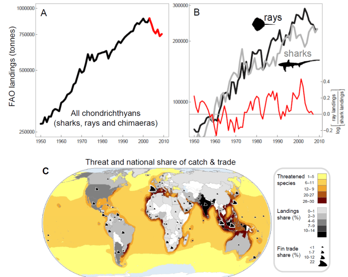 Figure 1 from Dulvy et al. 2014 shows shark and ray landings over time, as well as which nations are the largest contributors to the catch and trade of chondrichthyans.