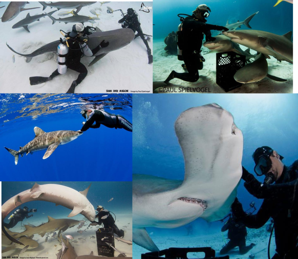 Selected images of Eli Martinez harassing poking, prodding and harassing sharks for fun. Taken from his personal Facebook, used under fair use. Most photos by Paul Spielvogel.