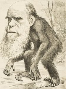1871 editorial cartoon depicting Charles Darwin as an ape. (Photo credit: Unknown artist in 1871 from The Hornet newspaper - no longer in publication)